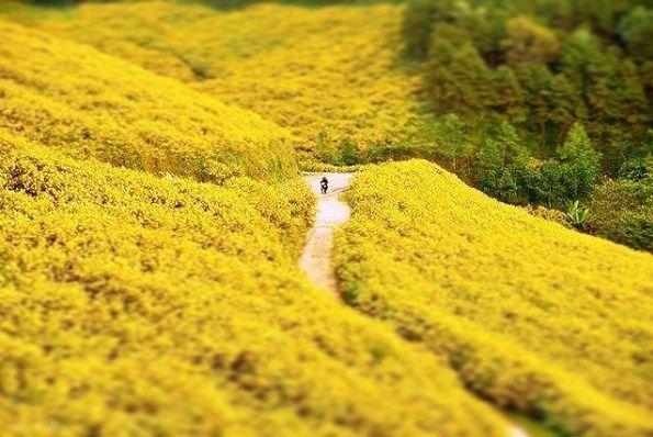 Tổng hợp tất cả các kinh nghiệm du lịch Đài Loan bạn cần biết
