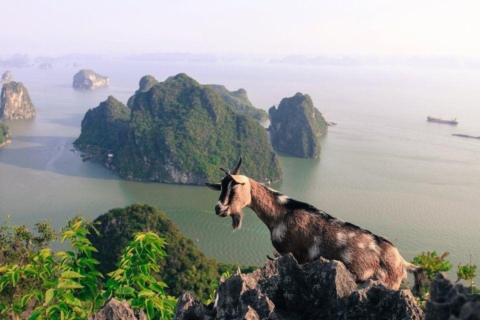 Tổng hợp cẩm nang du lịch Vịnh Hạ Long mới nhất