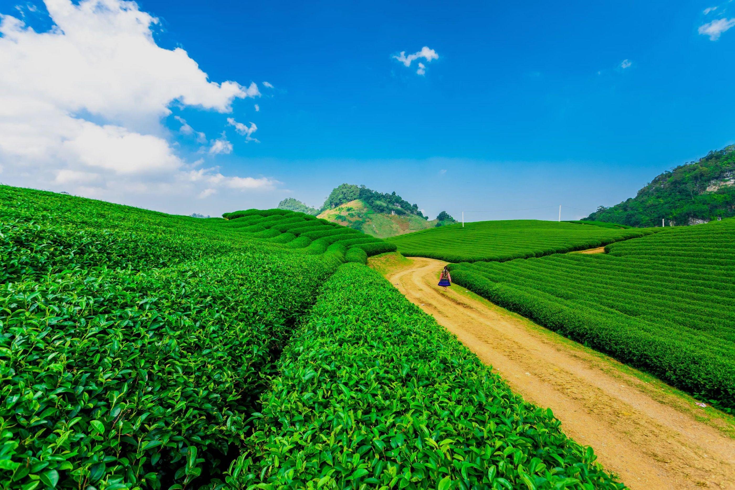 20 Homestay và Căn hộ hàng đầu tại Mộc Châu huyện | StayList